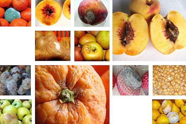 Φρούτα χωρις Οζον